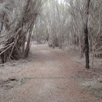 Track to Bournda Lagoon (106846)