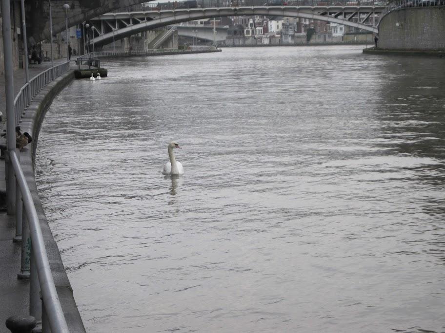 那慕尔Namur美图美景,分享一下 - 半省堂 - 11