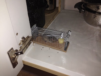 Maus in Mäusefalle