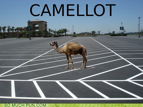 photo of a camel standing in a parking lot: Camel-lot