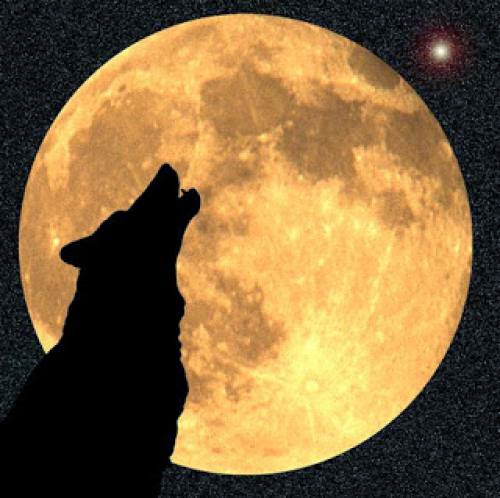 January Wolf Moon And Winter Magick