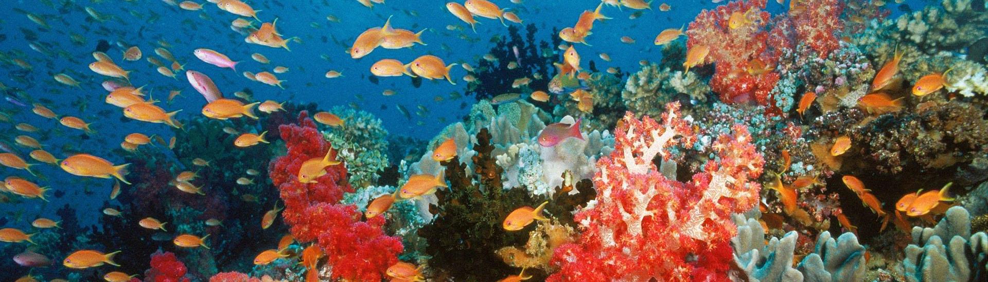 Baner filmu 'Ocean Przygód 3D'