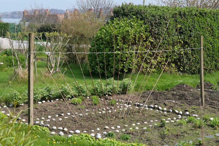 Sostegni sostegno e supporti per piccole piante rampicanti for Orto pensile fai da te