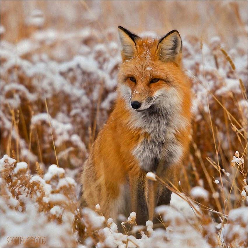 Testclod renard roux for Dans html