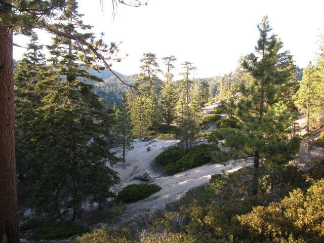 trees on white rocky land