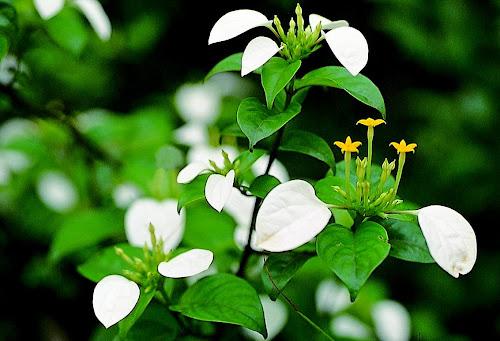 インテリア小物・植物