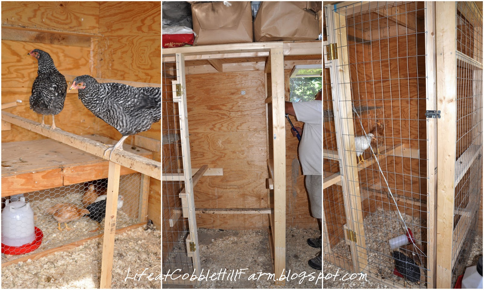 21 Chicken Coop Designs and Ideas You Need For Your Homestead