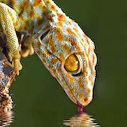 Фото Во сне черепаха и ящерица приснилась