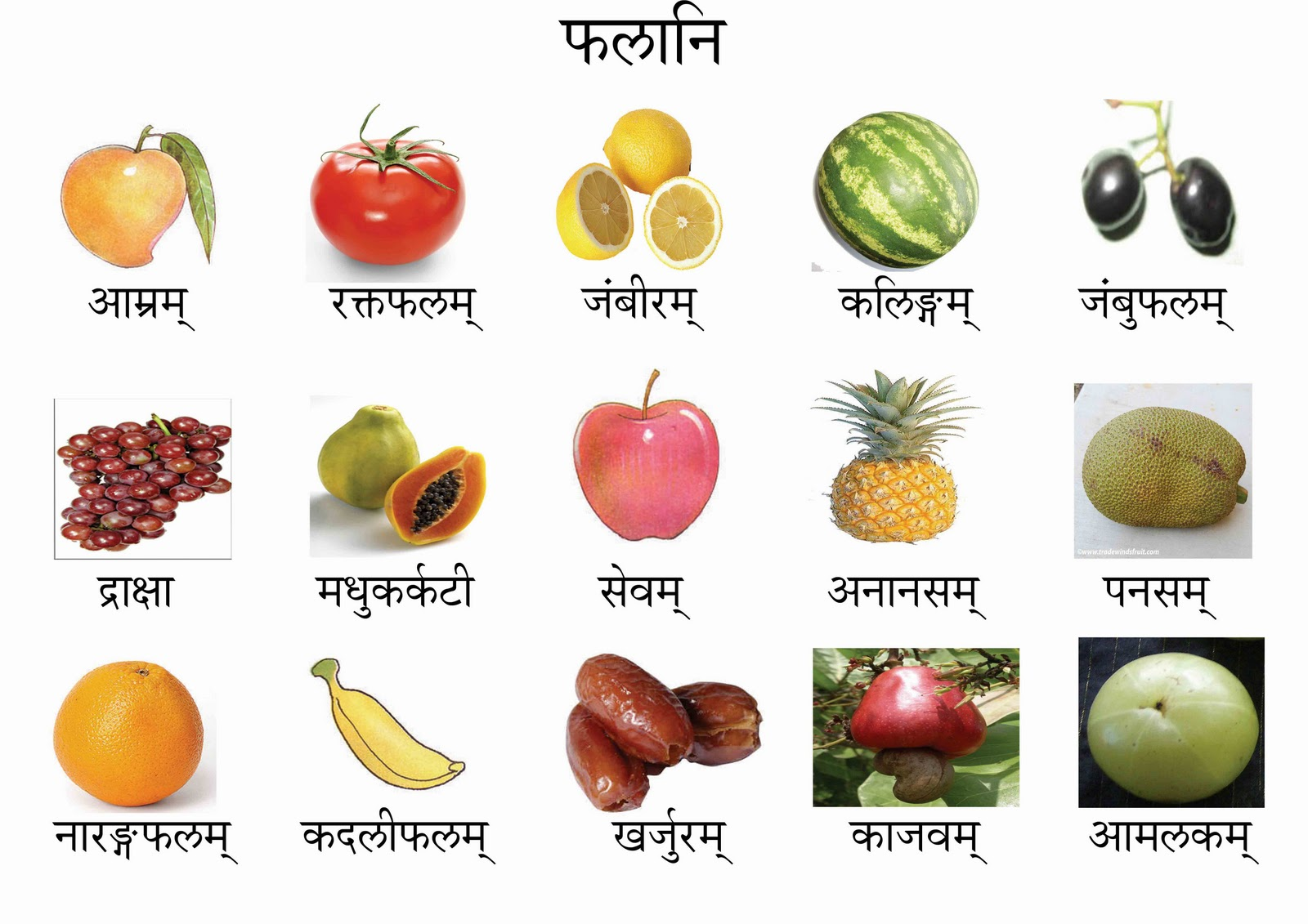 Flower Names With Pictures Infodik Net