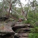winding up a rock outcrop (90243)