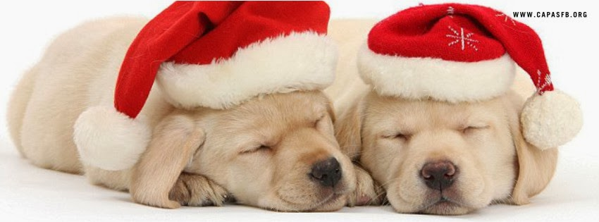 Capas para Facebook de Natal Cães