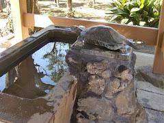江の島奥津宮手水鋳銅の亀