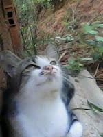 gatinha no mato gato no morro