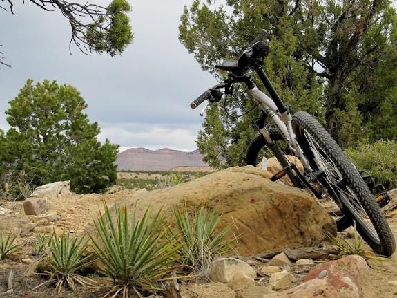 Yucca along Luke's