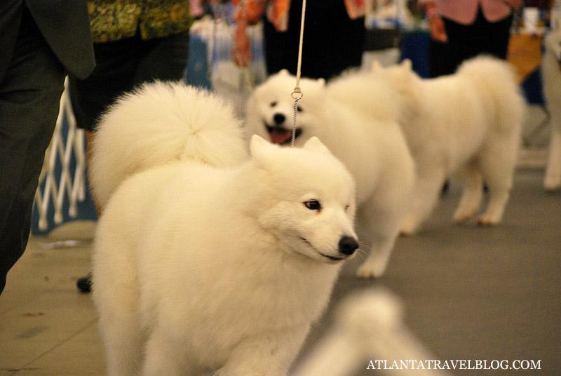 Atlanta Dog Show