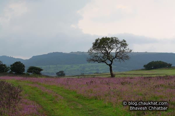 Flowerbed landscape with a beautiful tree at Kas Plateau