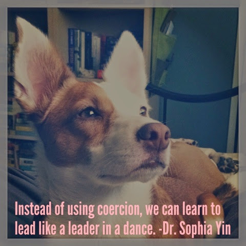 sophia yin leadership borderjack