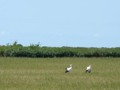 French village diaries migrating birds France storks