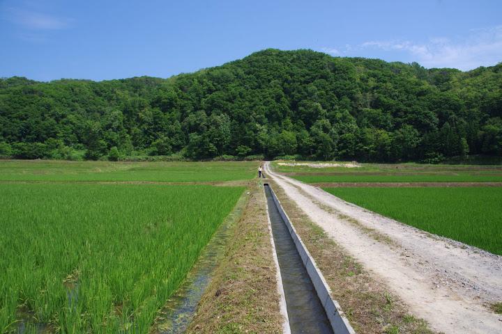 青々と広がる(有)田からもの圃場