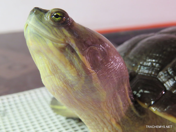 mes tortues (BK) - Page 11 IMG_2189