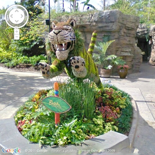 Roaming The Google Streets: Tiger Topiary at Busch Gardens, Tampa Bay