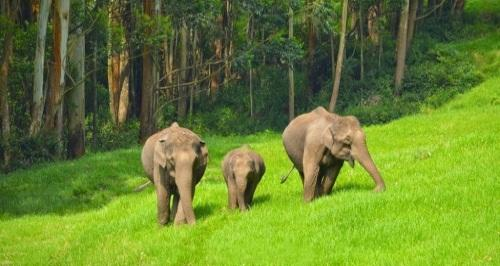Image result for eravikulam national park