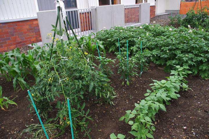 菜園2012年7月9日