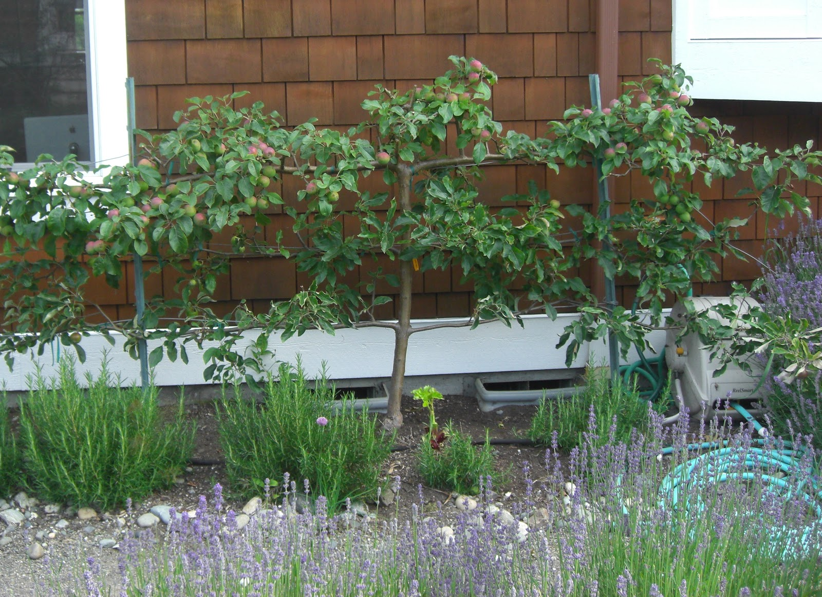 backyard orchard culture too good to be true