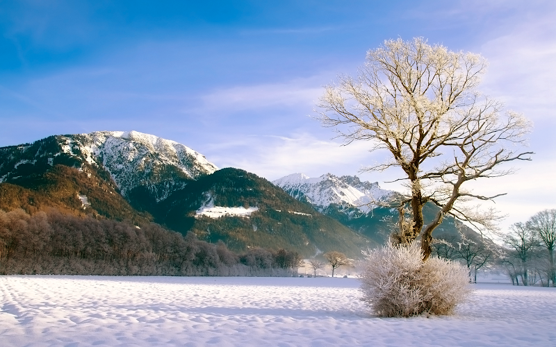 beautiful winter snow and tree wallpaper