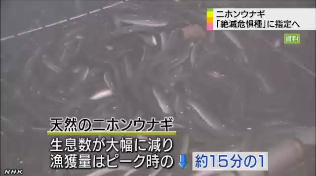 ニホンウナギが絶滅危惧種に・・・。漁獲量はピーク時の15分の1