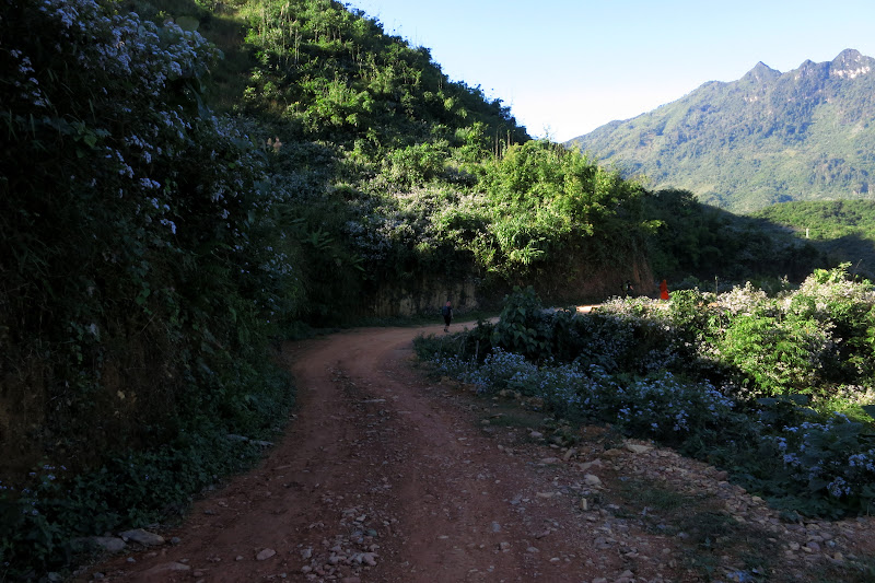 The newly-bulldozed road
