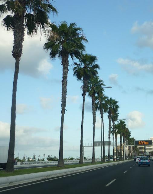 Straße, von Palmen flankiert