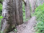 Old Trout Farm Loop Trail.