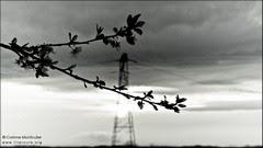 Fleurs et pylône