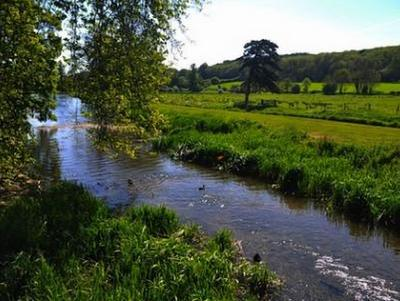 River flowing through meadows