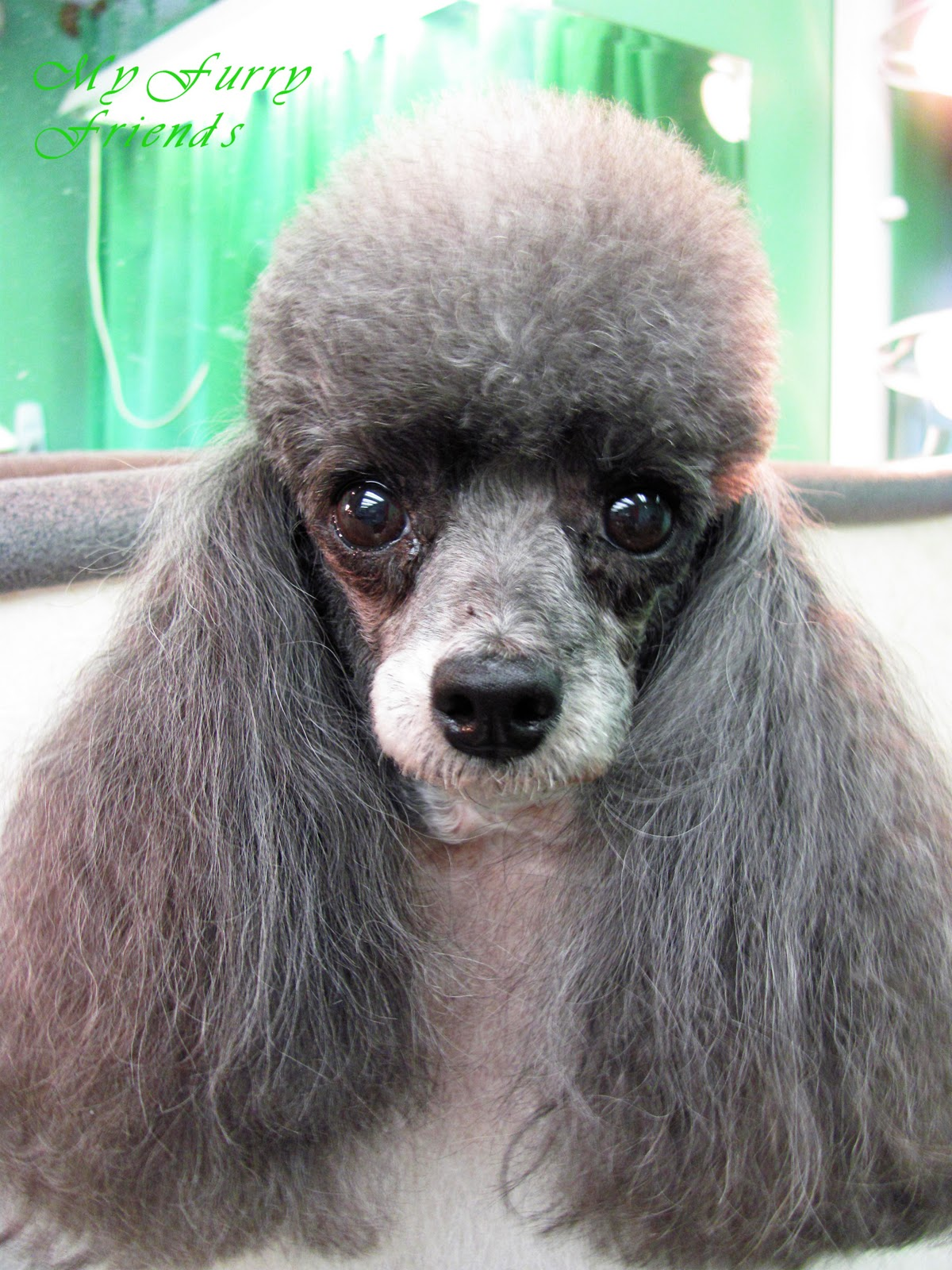 Pet Grooming: The Good, The Bad, & The Furry: Tuesday's ...