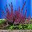 madeline bulmer avatar image