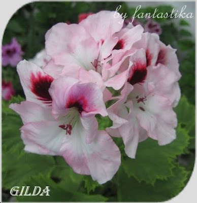 Красота без границ - Страница 7 Gilda%252520%2525282%252529