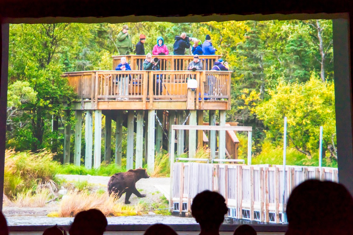 熊は自由に動きまわります