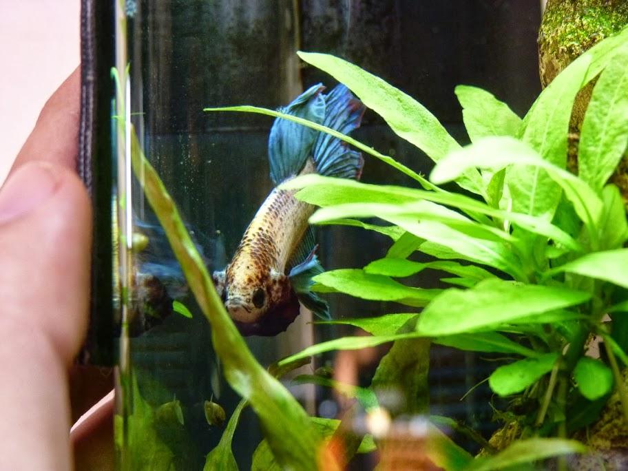 Ma petit histoire Aquariophile de 2009 à aujourd'hui  P1040856