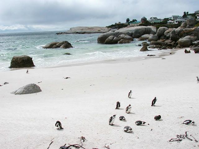 I pinguini di Boulders