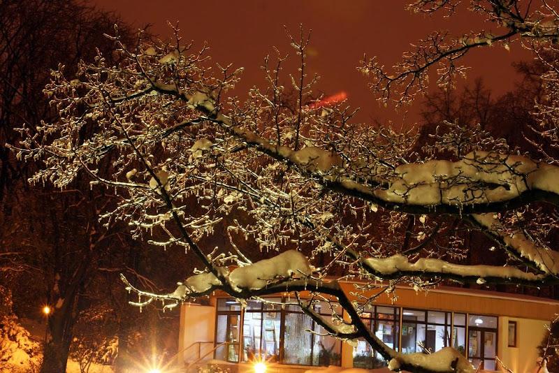 iarna zapada Bucuresti noapte fotografie Expoflora