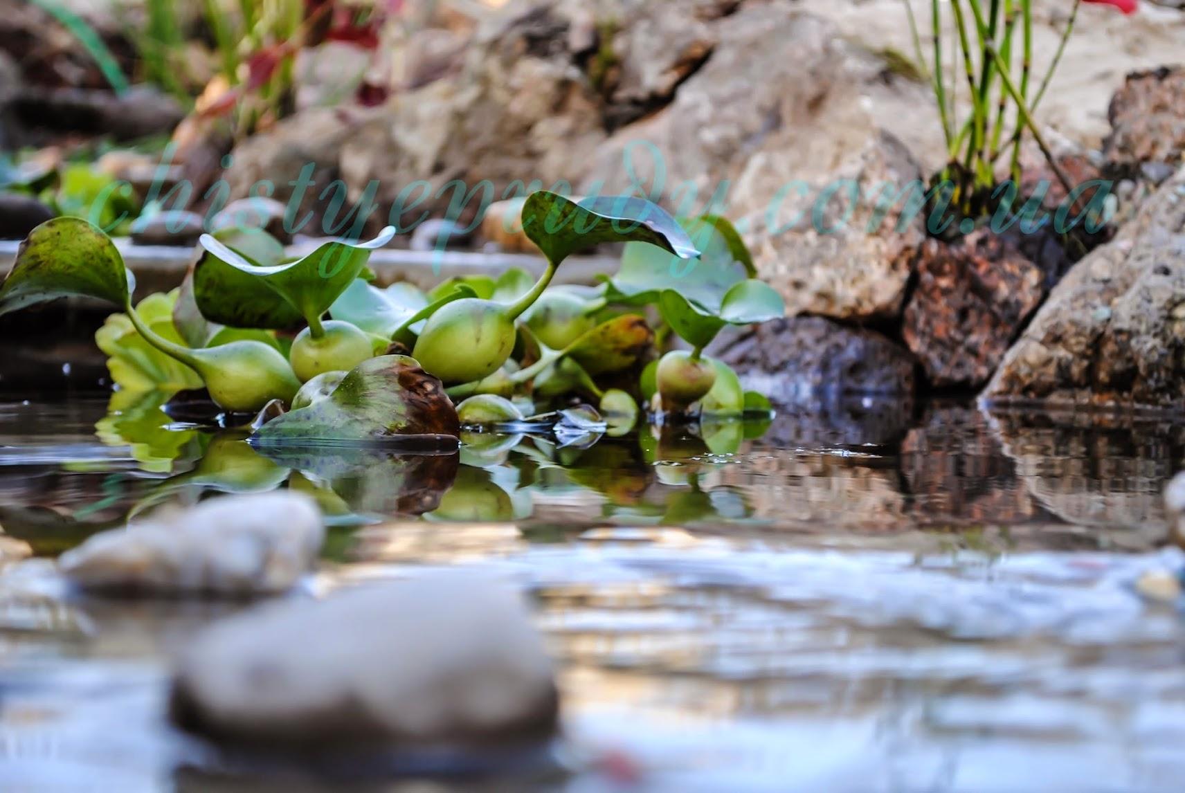 Озеленение пруда