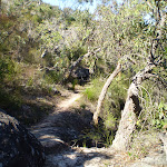 Track through Galston Gorge (6313)