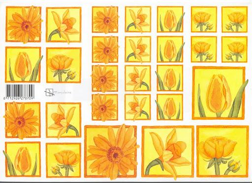 bloemen oranje.jpg
