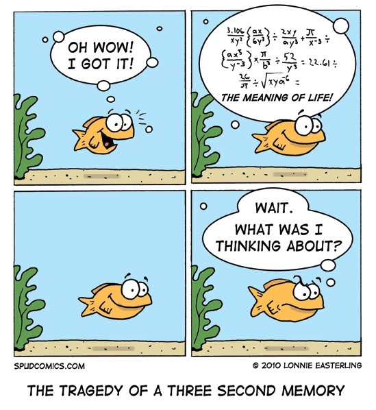 The Tragedy Of 3 Seconds Memory