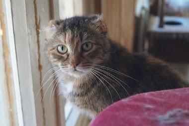 Кошка-безушка