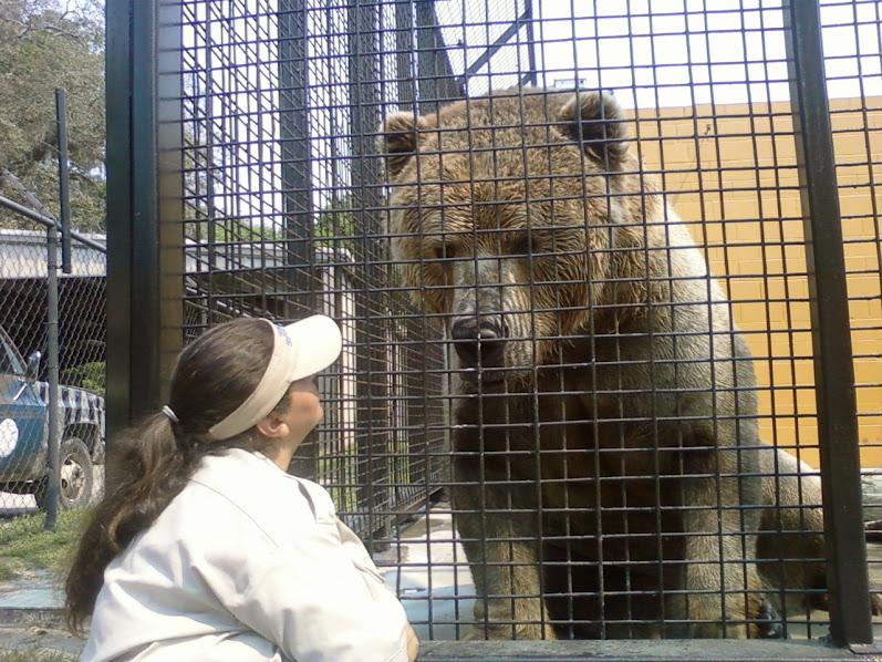 Urso pardo vs Urso polar 0403145753