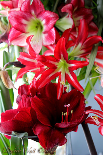 IMG_6420-2012-03-7-20-20.jpg