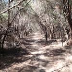 Track parallel to Bondi Lake (105247)